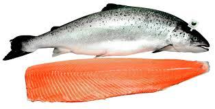 026_Salmon